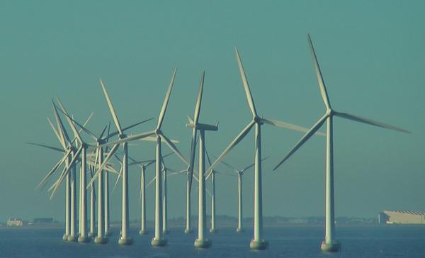 Wind farm. Photo by D. Dears